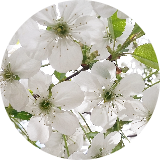 esmaaaa-5puantiye-tarafsiz-kozmetik-rehberi